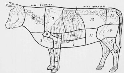 Diagram-of-Beef-Animal-Showing-Principal-Cuts